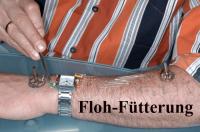floh-dressur-fuetterung