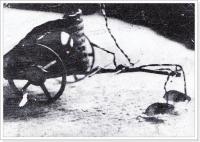 flohzirkus-vorstellung-duisburg-1953