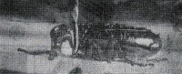 floh-am-draht-1953