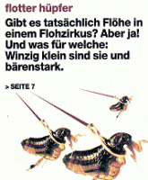 flohzirkus-birk-baz-titelseite-3-11-2007