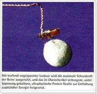 flohzirkus-floh-fussballer-foto-ulrich-benz